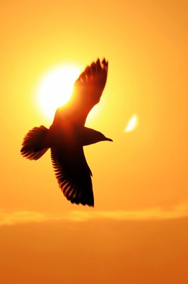 A bird flying in front of the sun